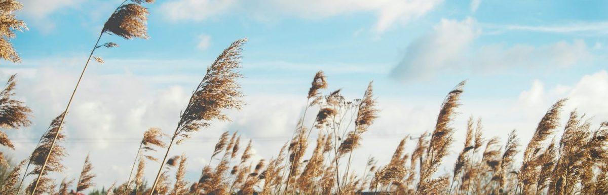 L'arte di dipingere il vento